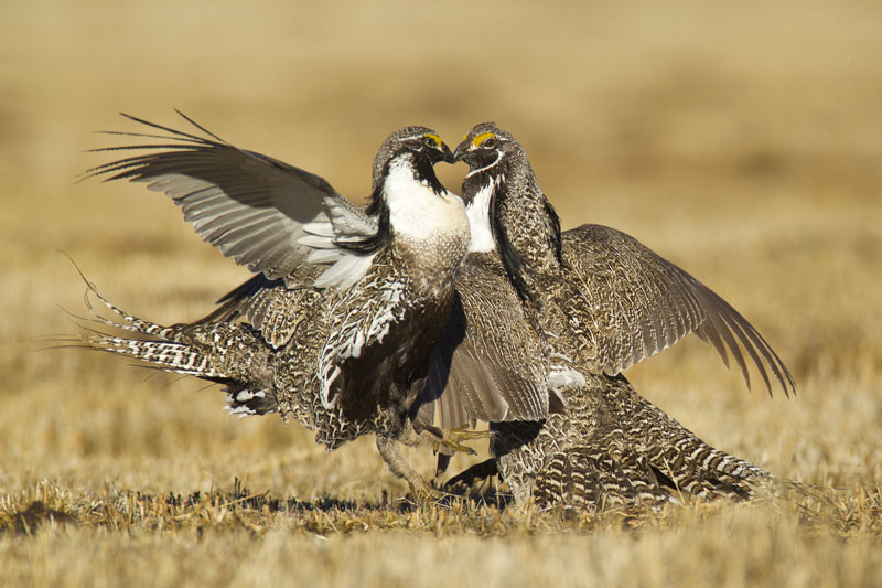 2011 Audubon Magazine Photography Awards