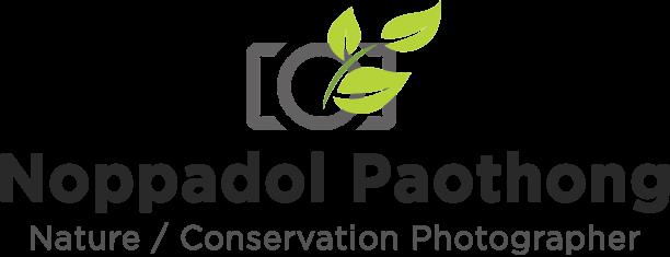 Noppadol Paothong Photography