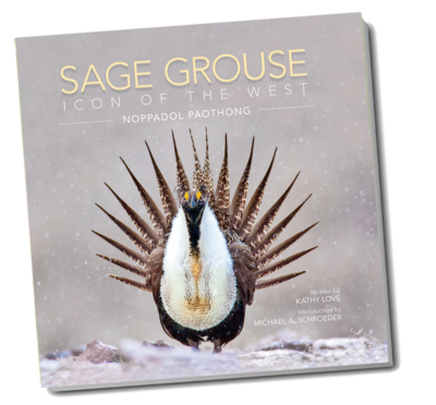 Sage Grouse, Icon of the West