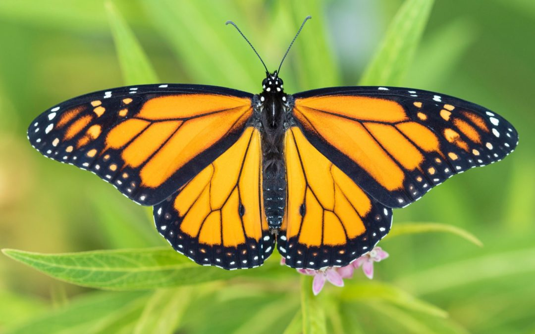 Monarch Program